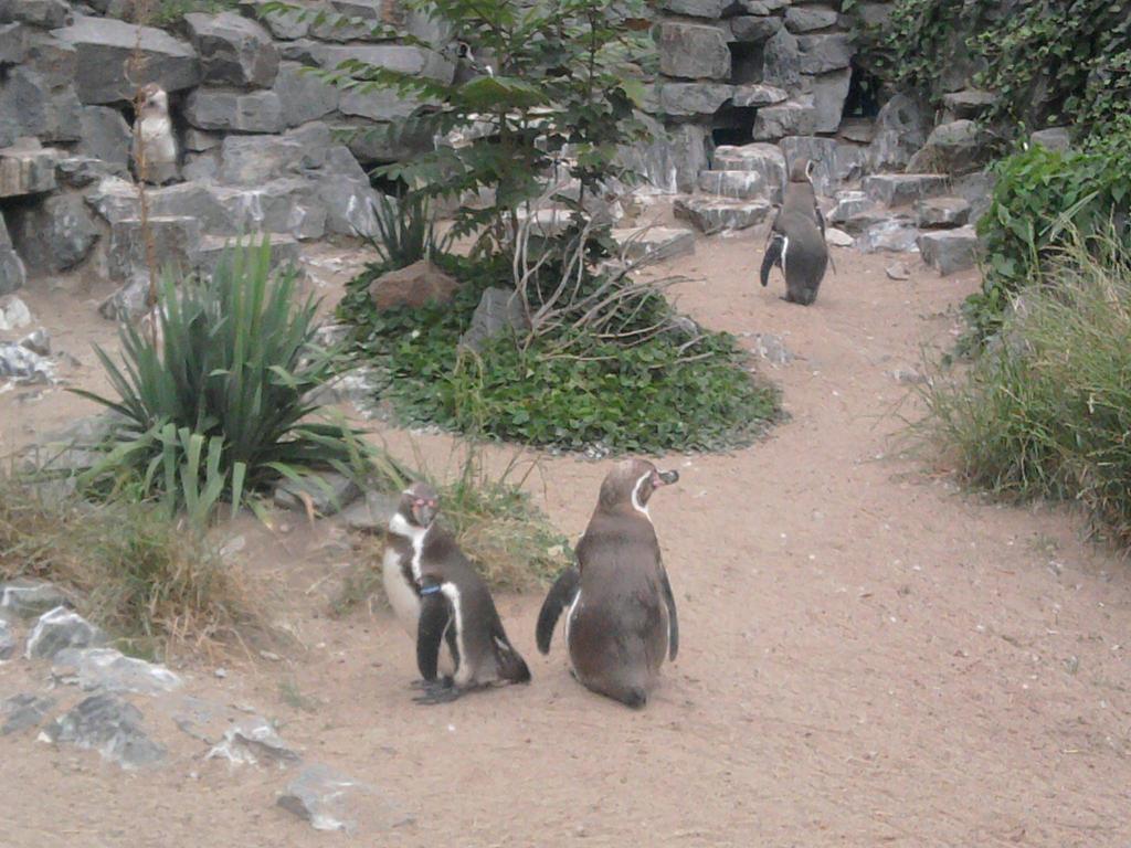 Penguin by Shirubaa-Fokkusu