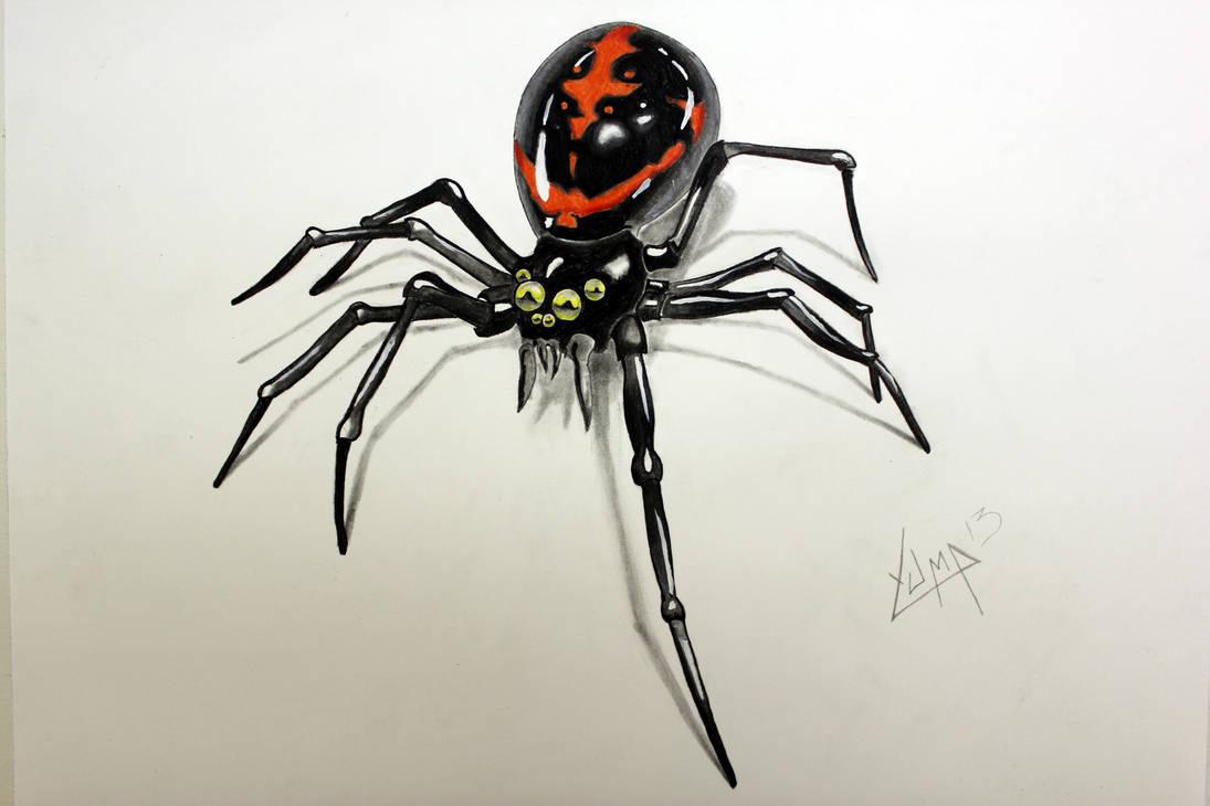 Spider 1 by yuma13