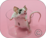 A glass of Mouse ?