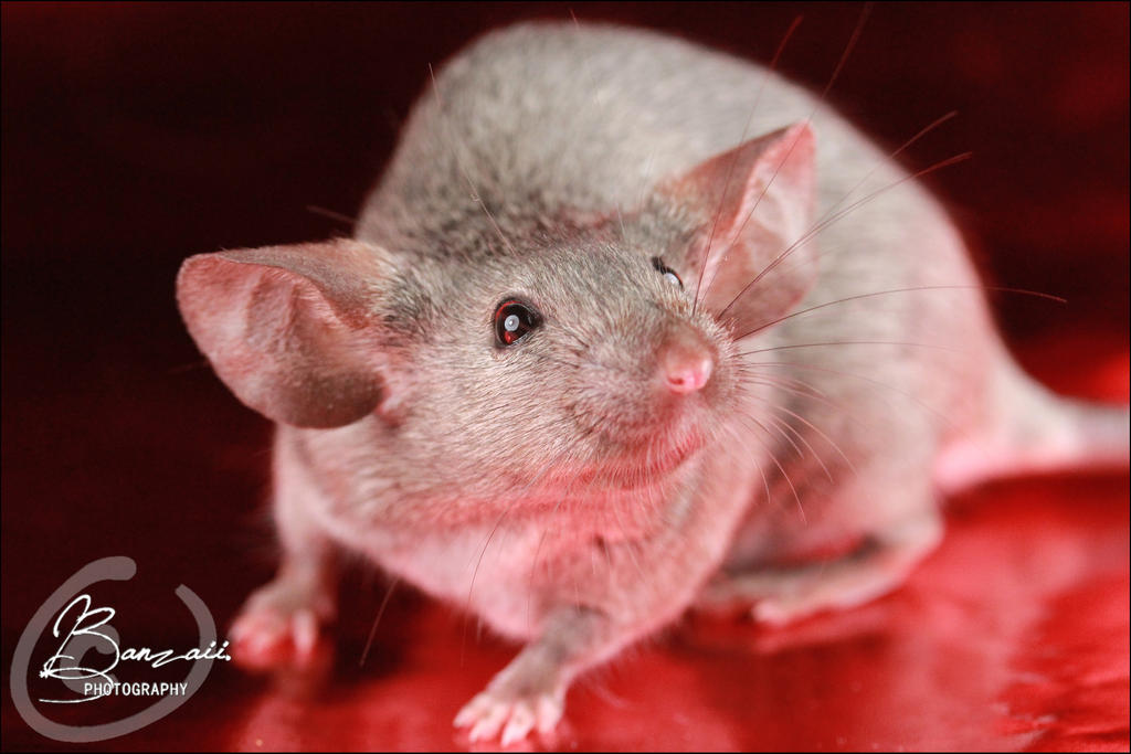 Top 28 Show Me Pictures Of Mice Show Me Pictures Of