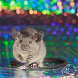 Van Raaij's Skyrim III - Show Mouse