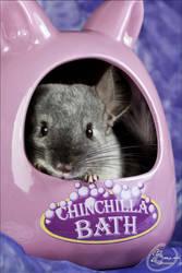 I have my chinchilla bath too !! by BanzZaii