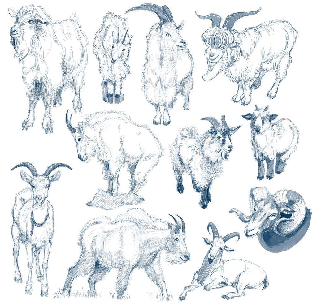 Goat Studies by cachava on DeviantArt