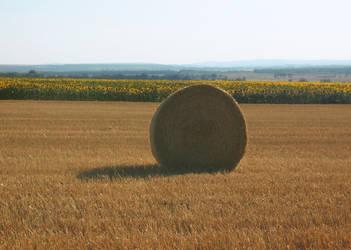 summer field 6 by sk0201