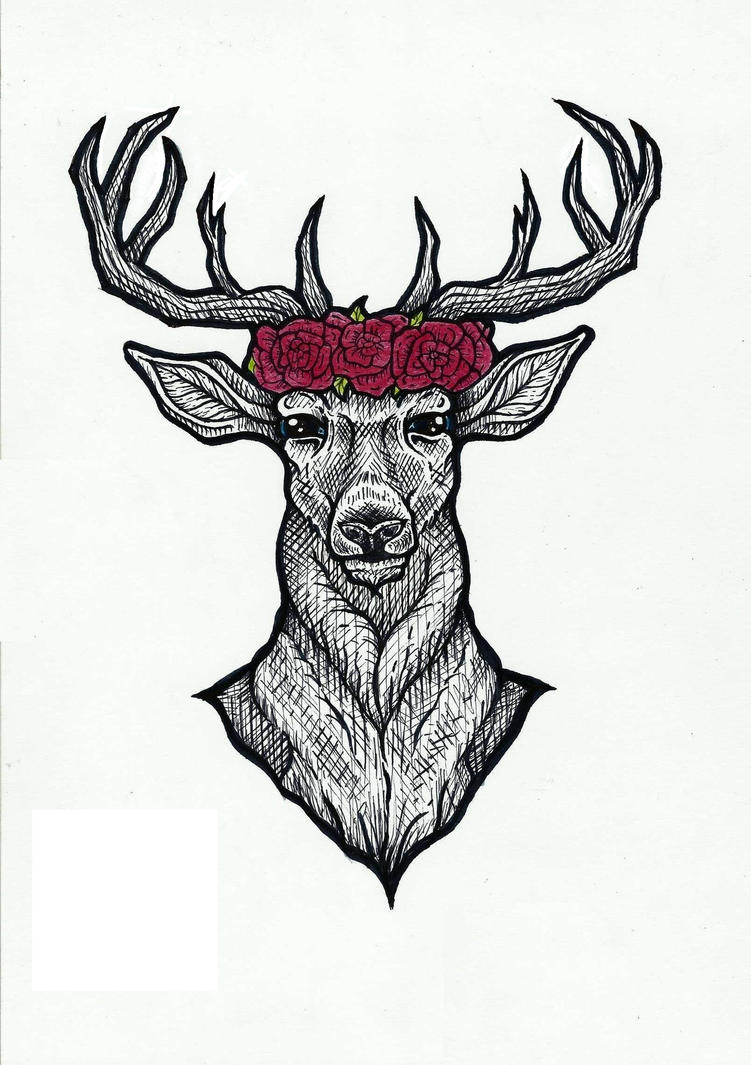 Deer by Pabllo13