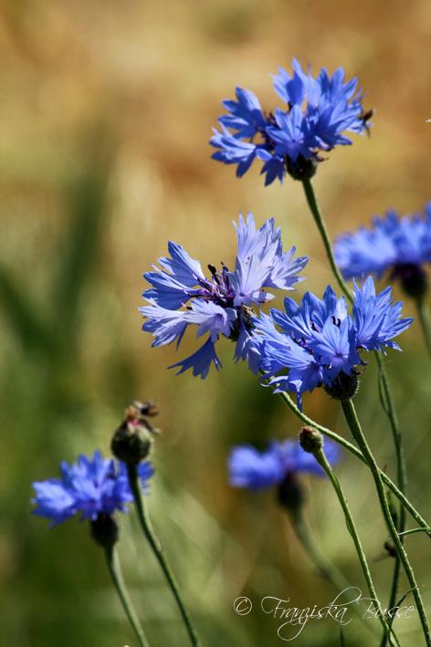 Blue summer by Gambassi