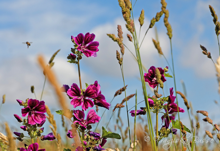 Colours of the summer by Gambassi