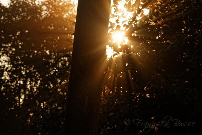 September morning V by Gambassi