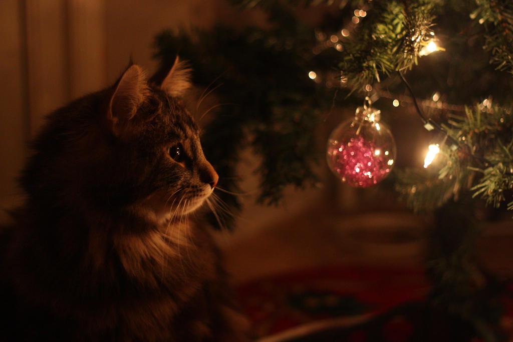 http://fc08.deviantart.net/fs70/i/2009/344/3/a/Christmas_cat_by_whatskunk.jpg