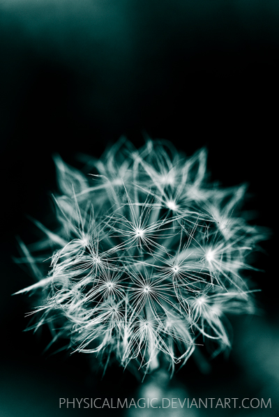 Ice Dandelion by PhysicalMagic