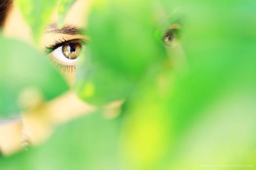 Hidden Eyes