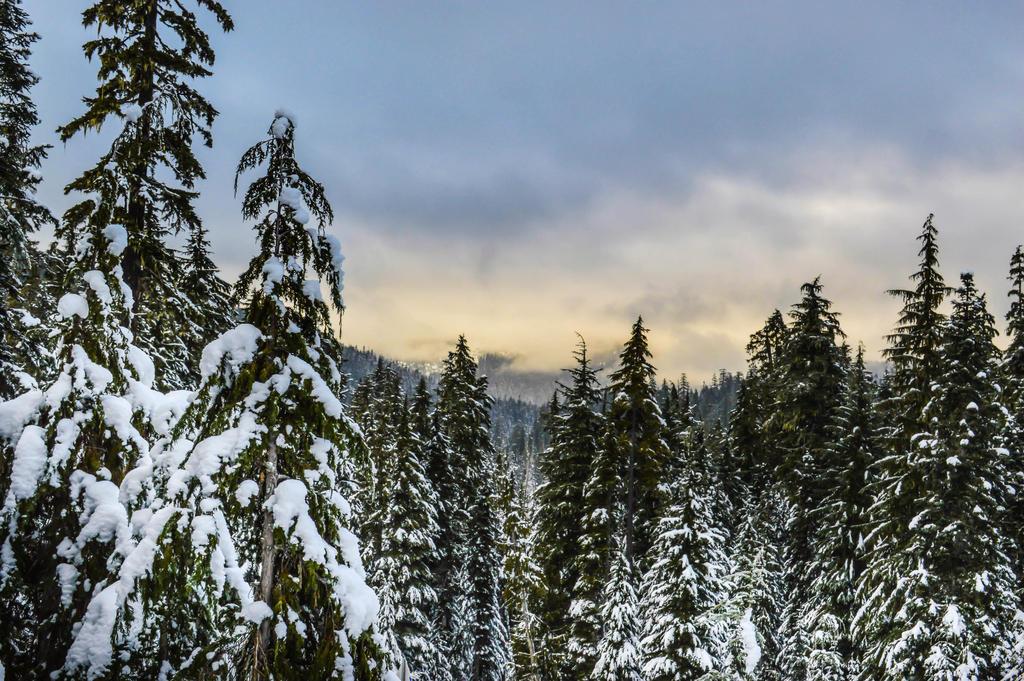 Winter Fairytale by dashakern