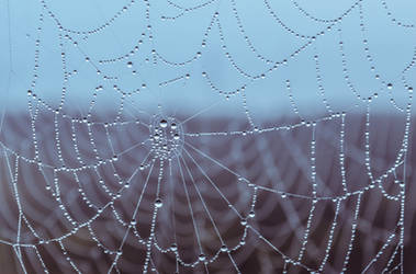 Make a web of dreams by dashakern