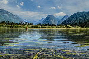 Pitt Lake in July by dashakern