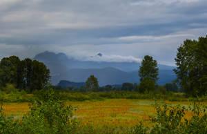 Pitt Meadows by dashakern