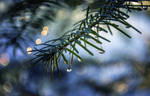 The whisper of tiny droplets