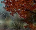 Drops on my window by dashakern