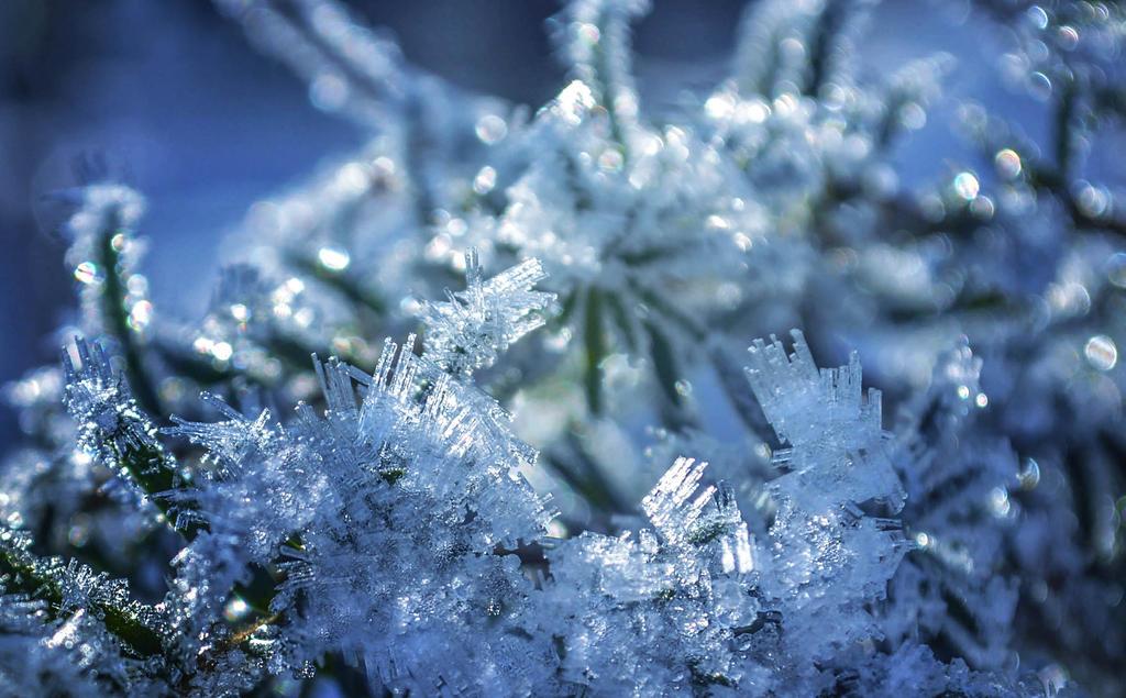 Winter's tale by dashakern