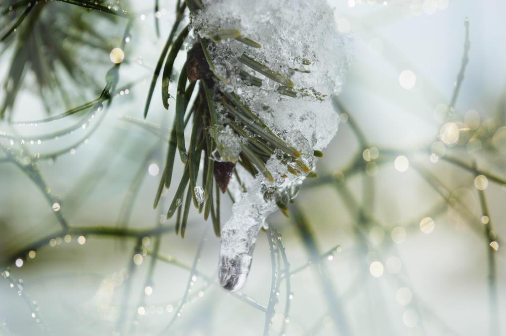 Wintertime by dashakern