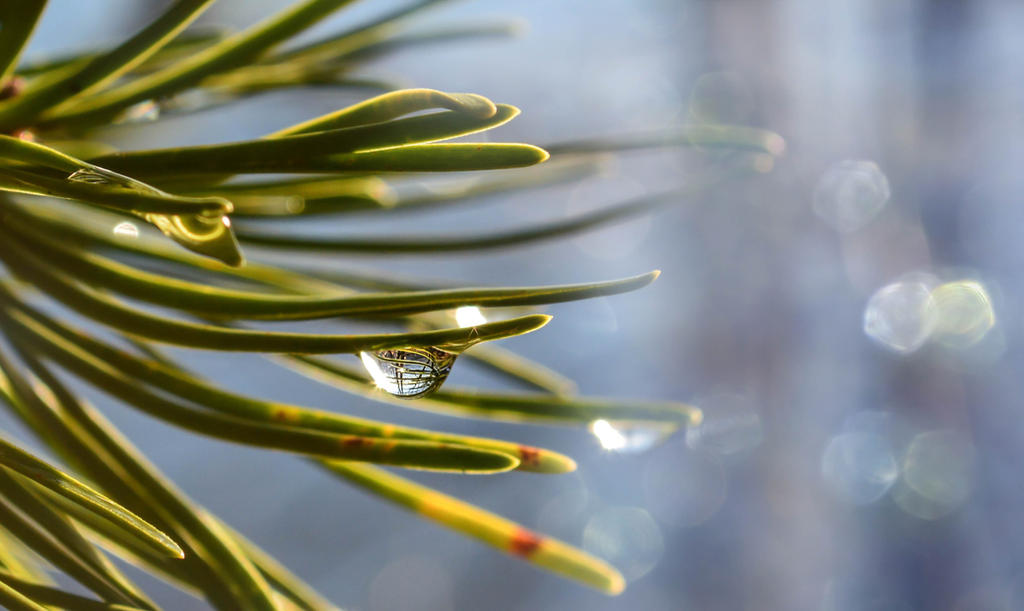 Life is a droplet... by dashakern
