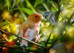 Sunny bird by dashakern