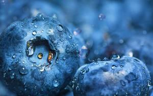 Blueberries by dashakern