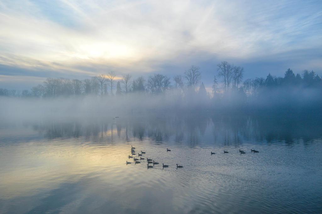 Fraser River in December