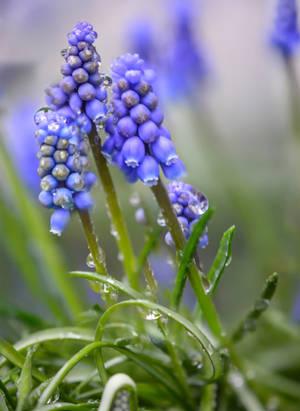 Blue Spring by dashakern