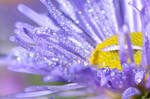 Droplets of Life