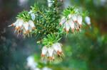 Flowers of December by dashakern