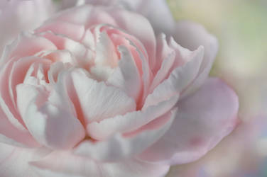 Spring softness by dashakern