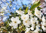 Charming Spring by dashakern