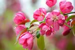Spring flower time