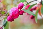 Springtime by dashakern