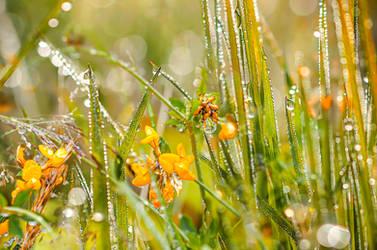 Rainy summer by dashakern