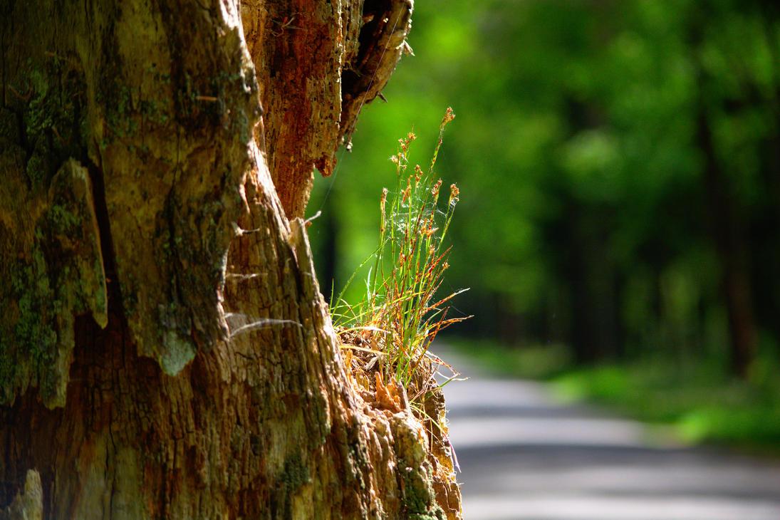 TreeWithLife by hscheper