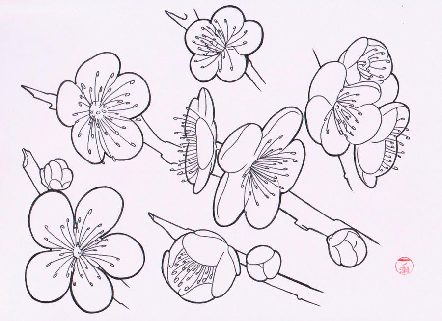 Traditional Flower Line Drawing : Sakura flash by laranj on deviantart