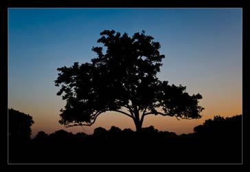 silhouette by Dreammastr