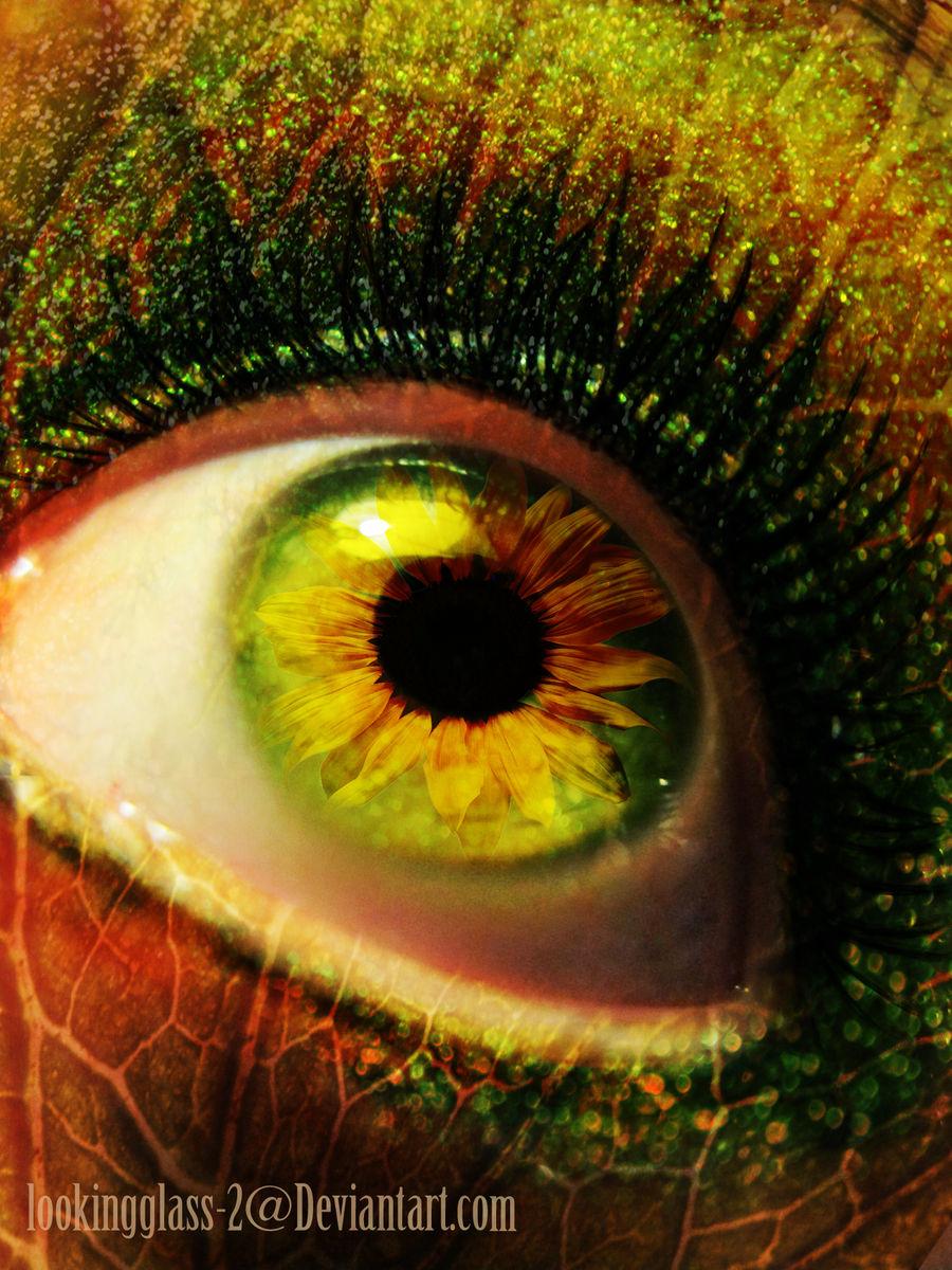 Sunflower Of my Eye
