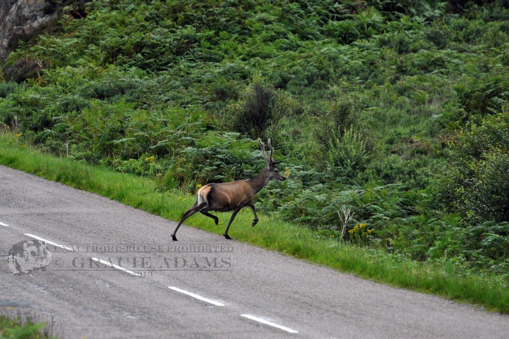 Speed dating red deer