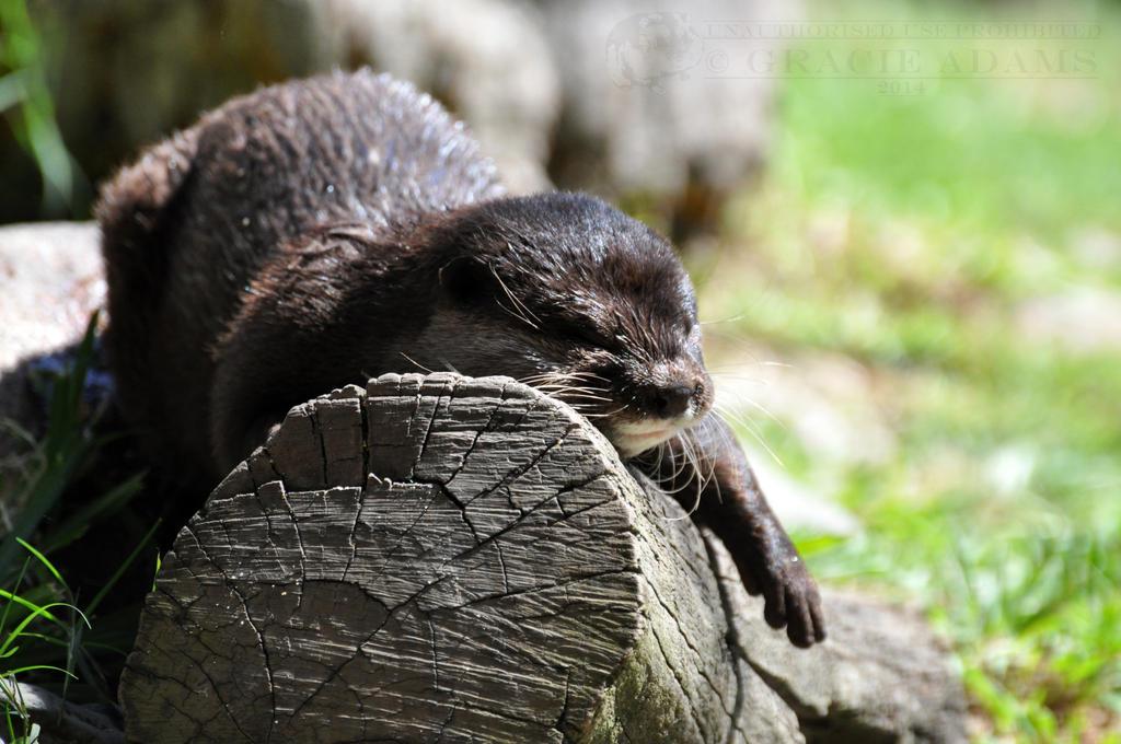 UWW-Otter XIV by ImLookingForTime
