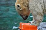 SW-Polar Bear XXVI