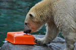 SW-Polar Bear XXV