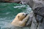 SW-Polar Bear XXIV