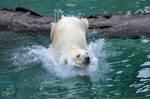 SW-Polar Bear XXII