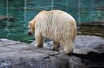 SW-Polar Bear XX