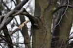 LOUTH-Treecreeper