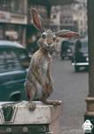 Christopher Robin: Rabbit Character Design