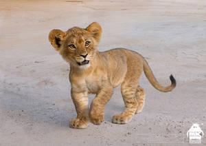 The Lion King: Simba Cub Character Design