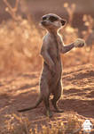 The Lion King: Timon character design